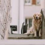 How To Carry A Large Dog Down Stairs (And What Not To Do!)