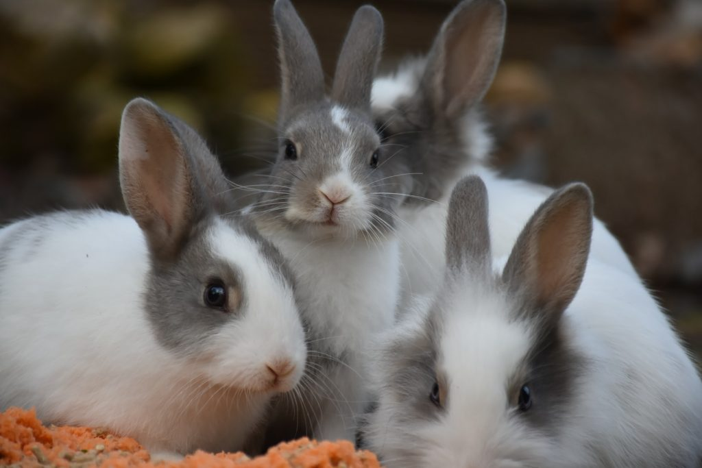 Are rabbits low maintenance
