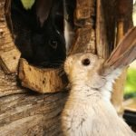 How Do I Know If My Rabbits Are Mating? (And What To Look For!)
