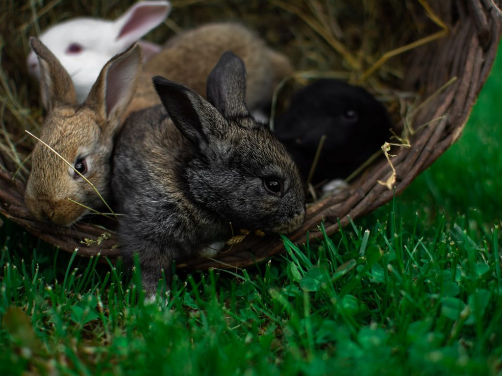 how to clean rabbit poop off grass