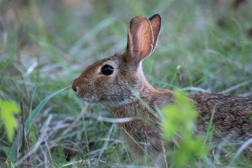 pine pellets safe for rabbits