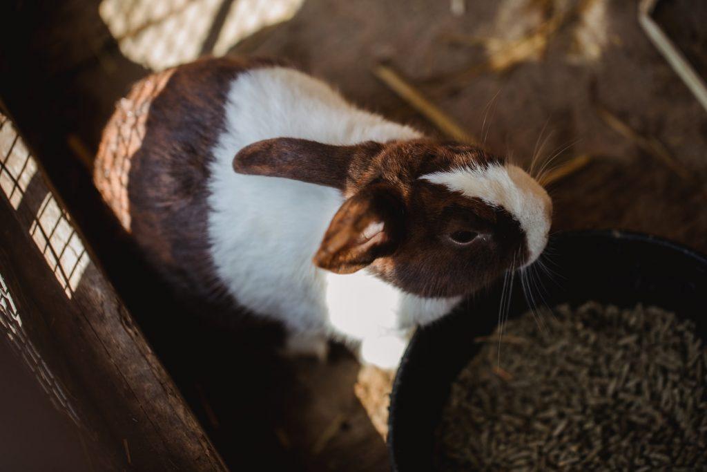 why do rabbits need salt wheels