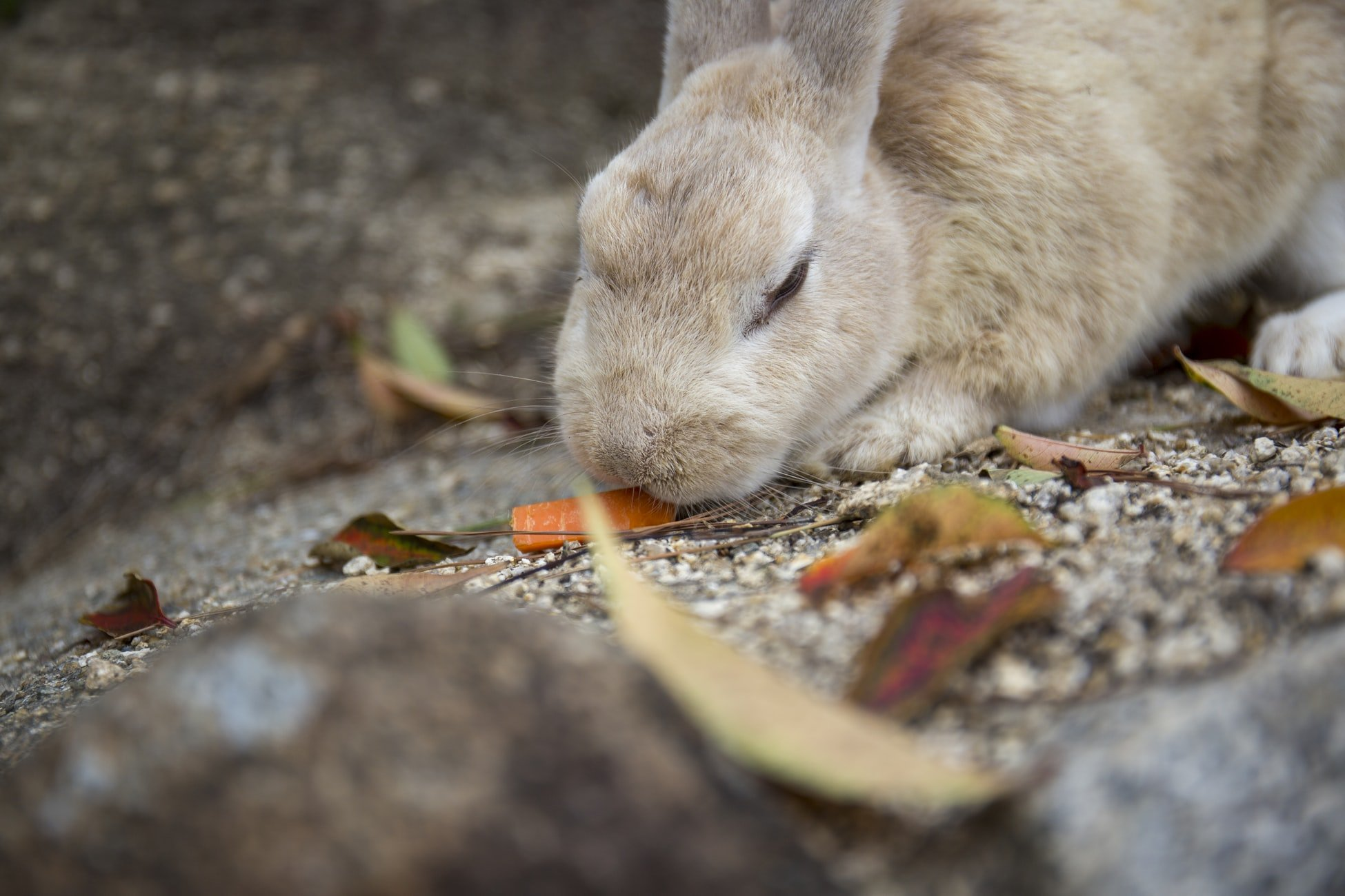 how to sedate a rabbit at home