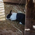 Why Does My Rabbit Poop On Me? (And How To Stop It!)