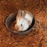 Why Do Rabbits Thump At Night?