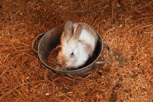 Why do rabbits thump at night