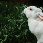 Do Rabbits Die Easily? (And How!)