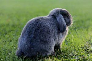 Do rabbits eat zinnias