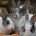 Can Rabbits Eat Sugar Snap Peas? (And Why!)