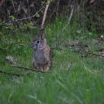 Can Rabbits Eat Rye Grass? (And Why!)