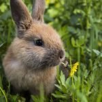 Do Wild Rabbits Have Babies in the Winter? (And Why!)