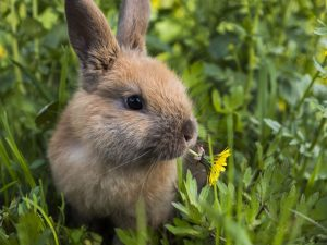 Do wild rabbits have babies in the winter
