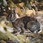 Why Do Rabbits Dig Holes Then Fill Them In? (And How!)