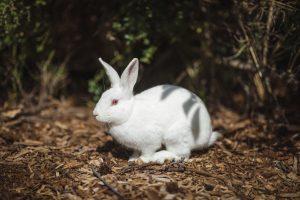 how do baby rabbits breathe underground