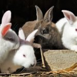 How To Stop Male Rabbits Mounting (And Why!)