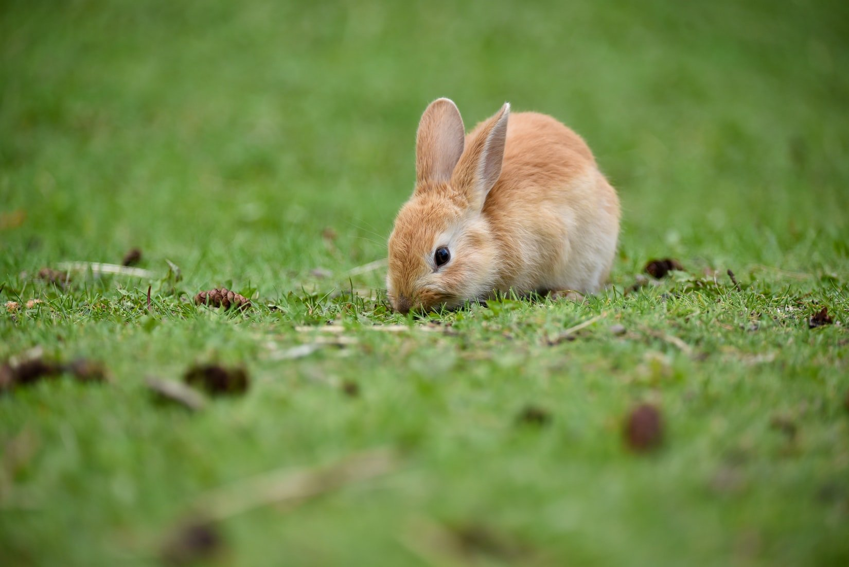 how to protect bunny nest from rain