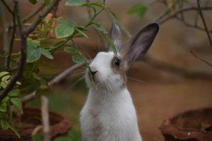 Do apartments allow rabbits