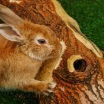 How Much Scratching Is Normal For a Rabbit (And How To Help!)