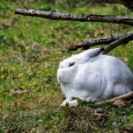 Why Do Rabbits Vibrate Their Feet? (And How To Help!)