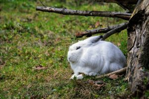 Why do rabbits vibrate their feet