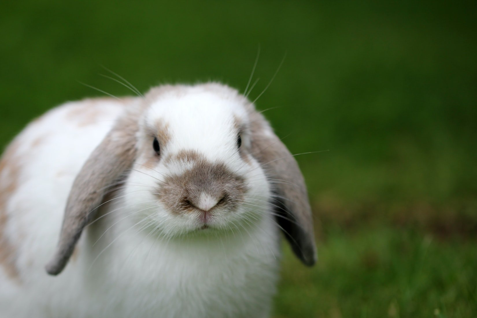how to tell if your rabbit is deaf