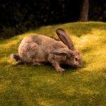 Is Himalayan Salt Good For Rabbits?