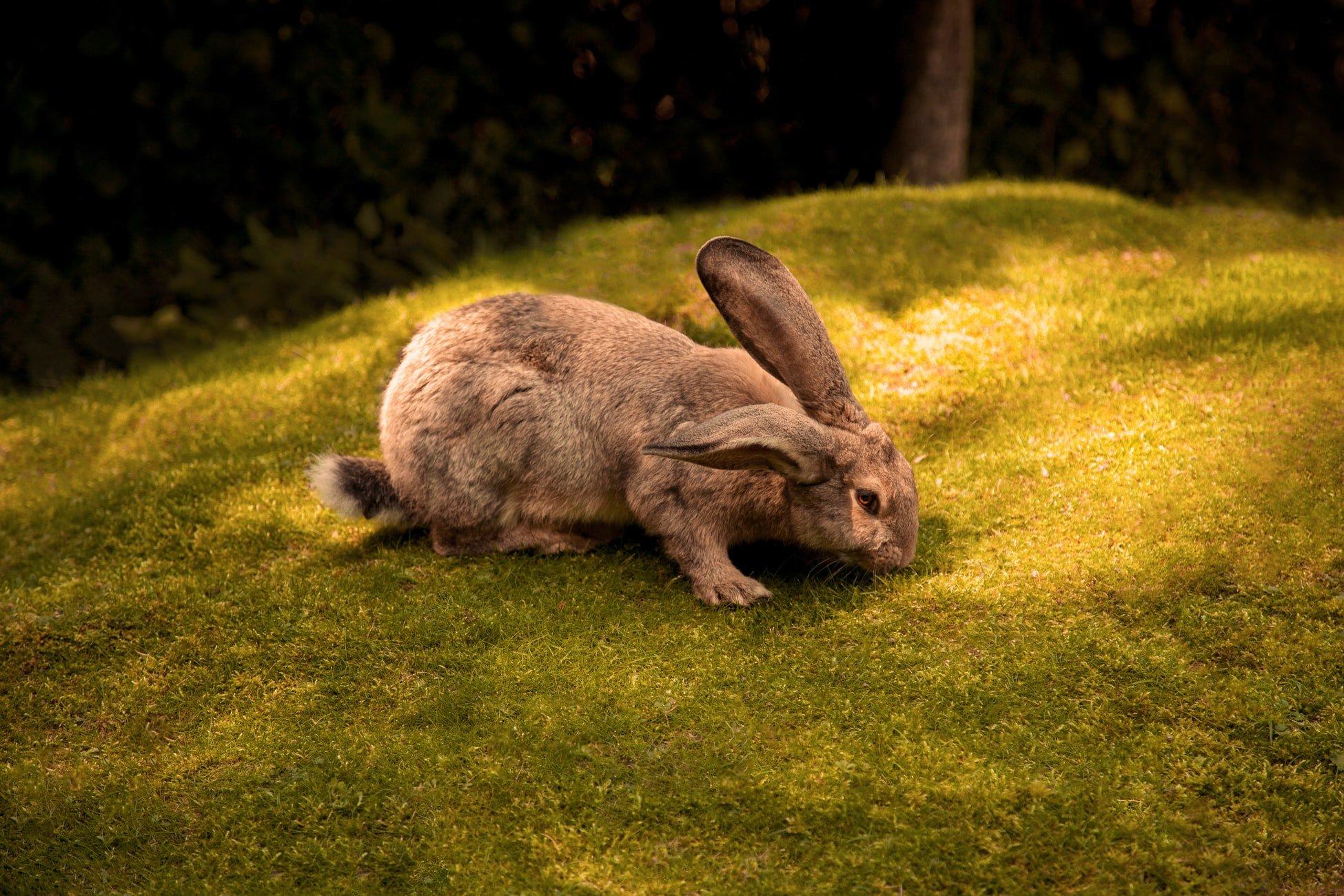 Is Himalayan salt good for rabbits