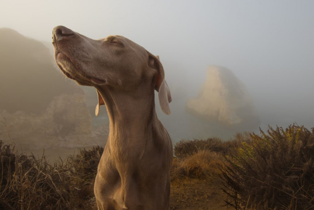 can untrained dogs detect cancer