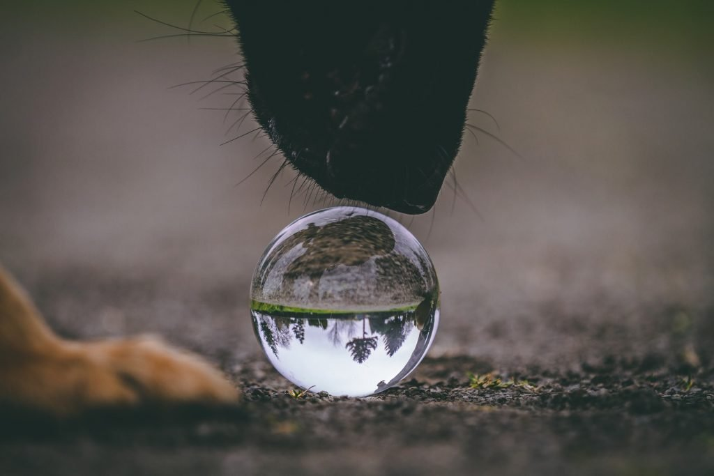 can dogs eat bubbles