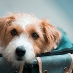 Should I Visit My Dog After Rehoming?