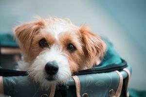 should i visit my dog after rehoming