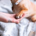 How To Prevent Dog Feet From Smelling Like Corn Chips (And What To Use!)