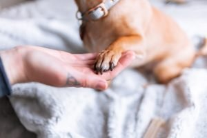 how to prevent dog feet from smelling like corn chips