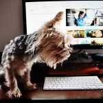 Can Dogs See Computer Screens? (And How To Protect Their Eyes!)
