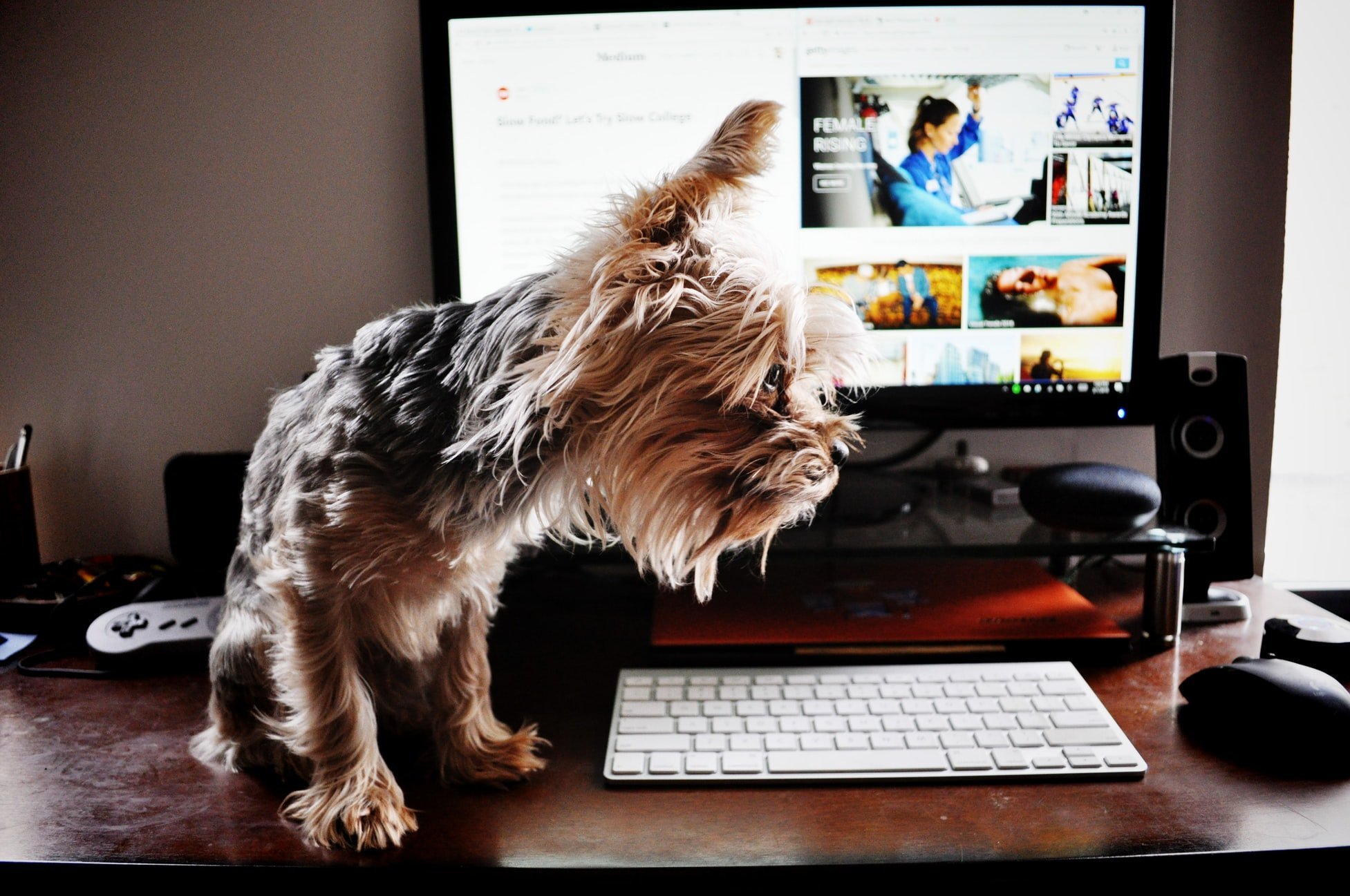 Can dogs see computer screens