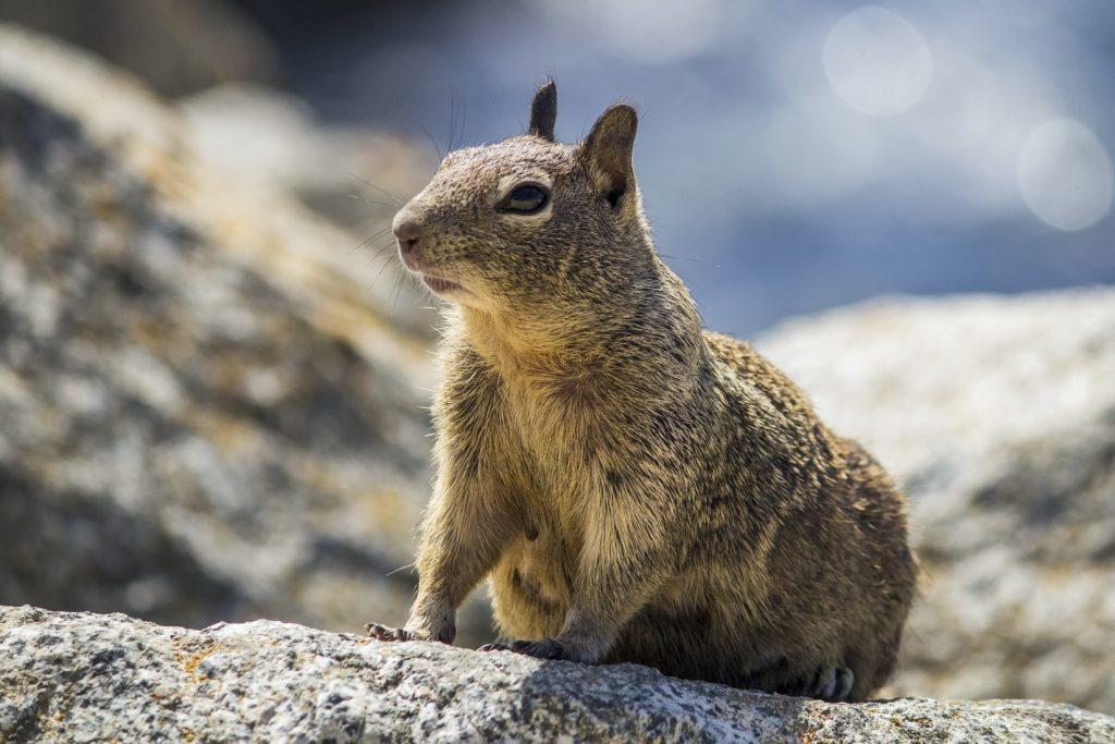 Do squirrels eat dog poop