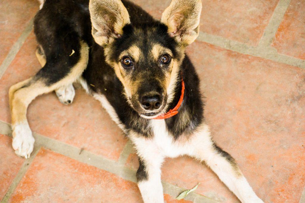 Can I use Refresh eye drops on my dog