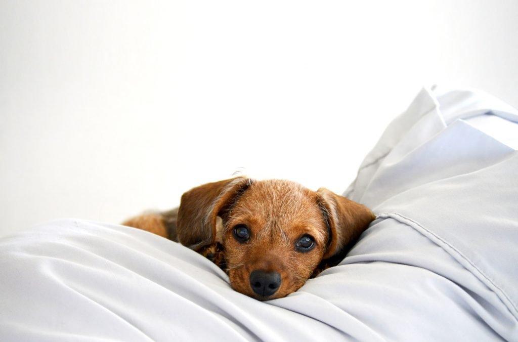 Can my dog sleep with an inflatable collar