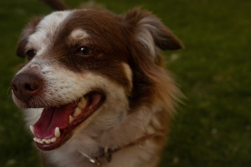 Can I use fluoride-free toothpaste on my dog