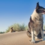 Is Camphor Safe For Dogs To Inhale?