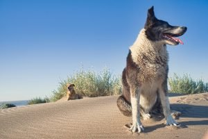 Is camphor safe for dogs to inhale