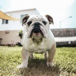 Can Dogs Control Their Farts?