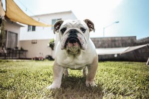 Can dogs control their farts