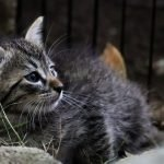 Why Do Cats Wag Their Tails In Your Face?