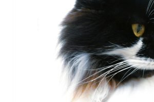 can dry cat food go bad in heat