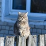 Can Cats Sense Bad Energy?