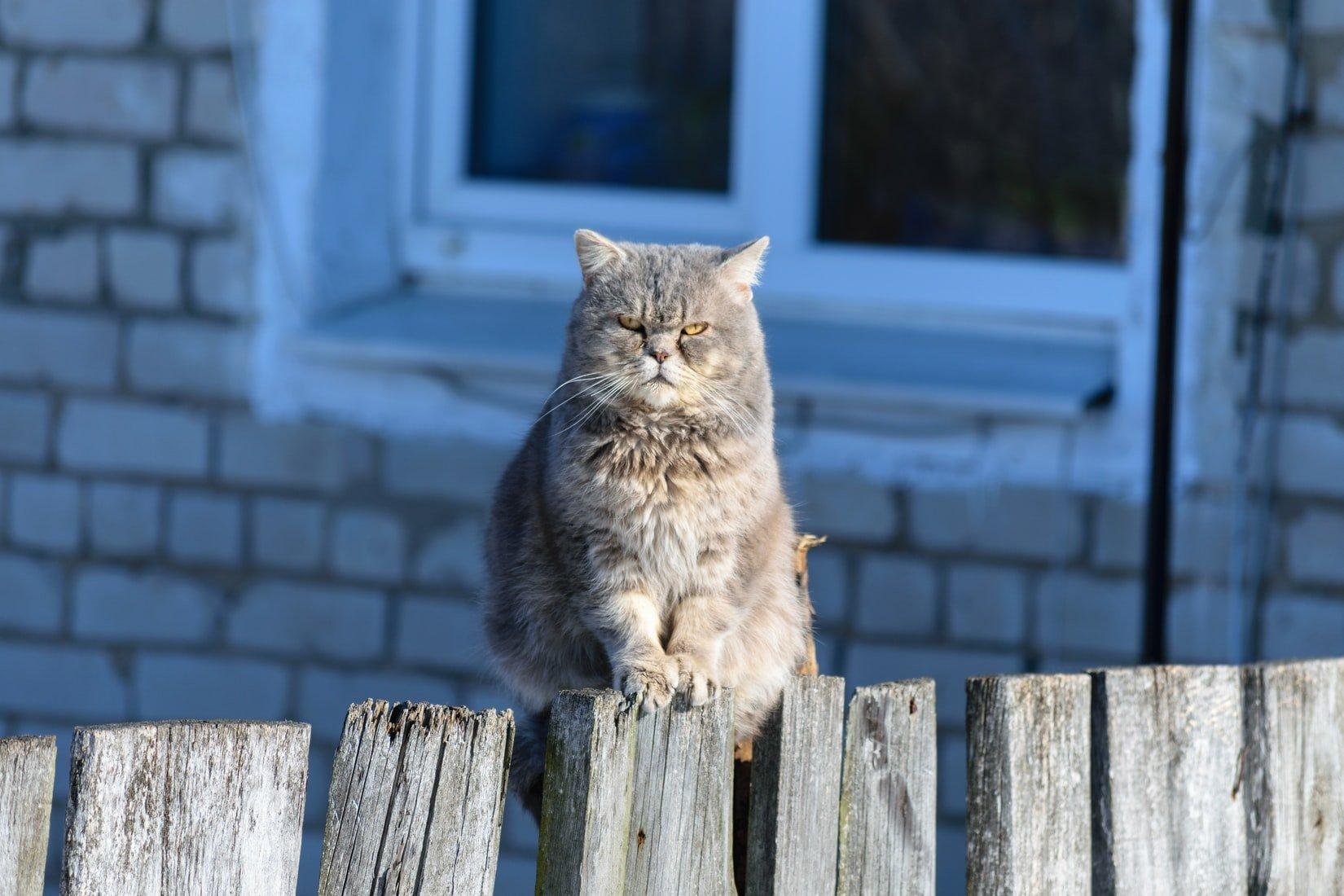 can cats sense bad energy