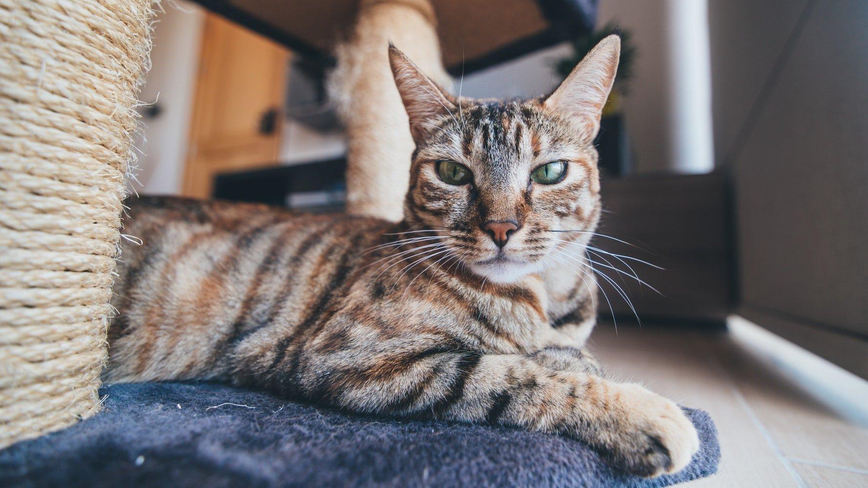 cat dandruff or flea eggs