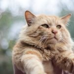At What Age Do Male Cats Calm Down?