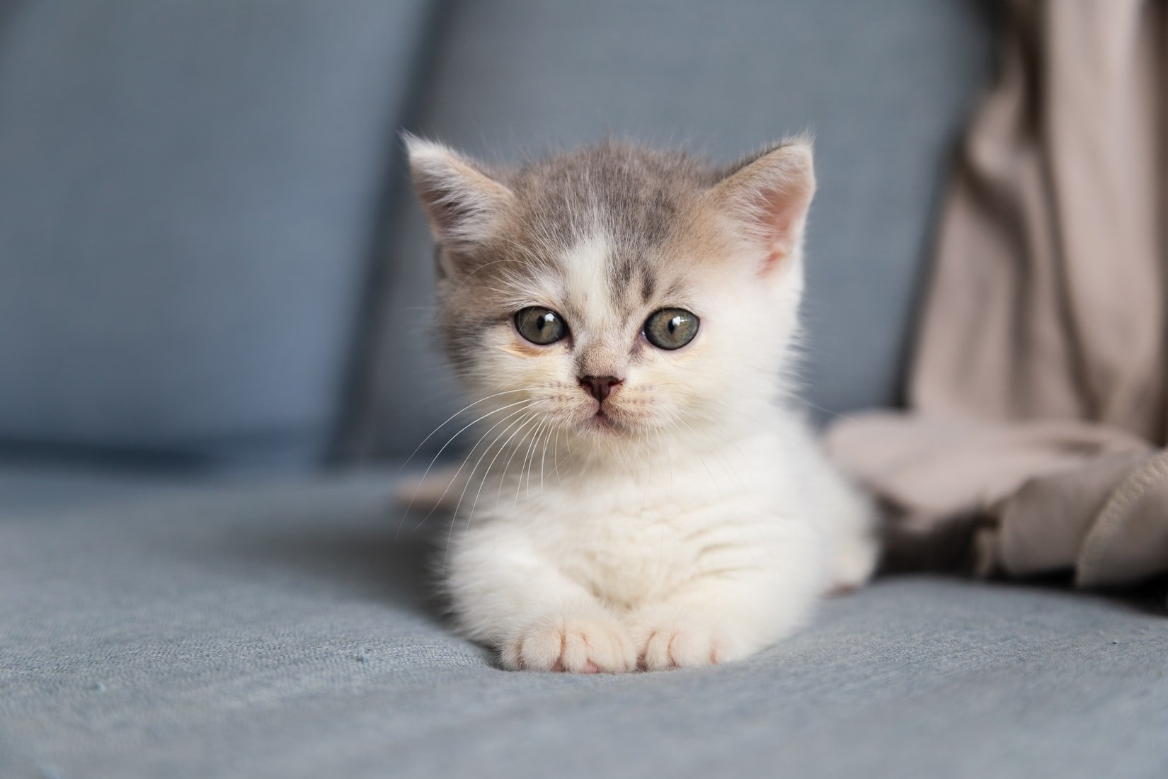 Should I remove a dead kitten from the litter